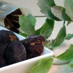 Truffle black diamond perigord tree ilex money
