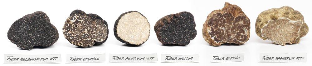 truffle FAQ