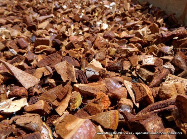 Mushrush Dried Reishi