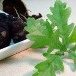 Truffle black diamond start own estate farm - perigord tree ilex money