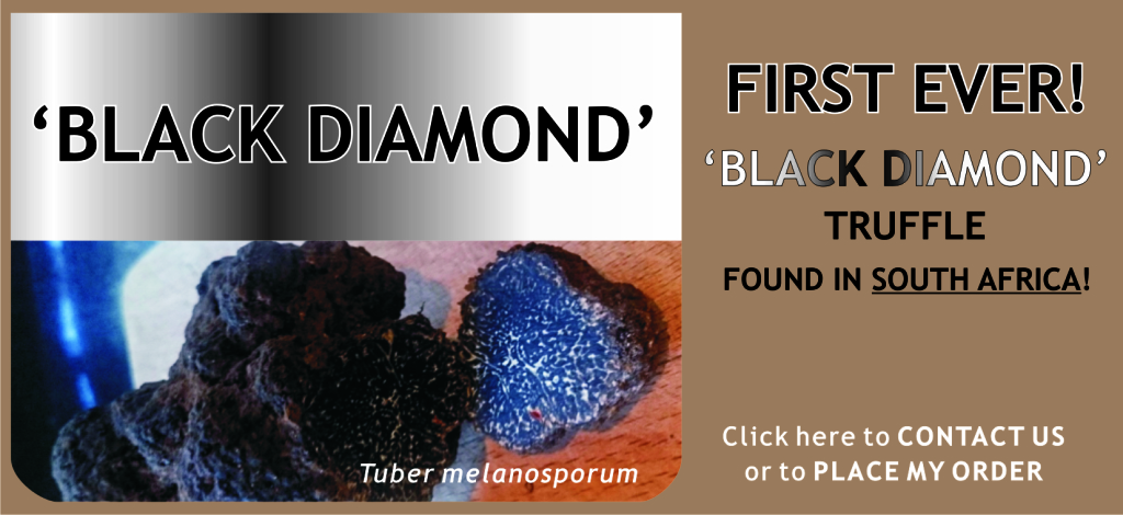MR BLACK DIAMOND JAN15